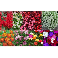 Kit fleurs de massif