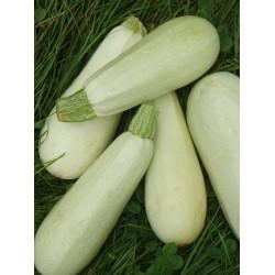 Courgette blanche