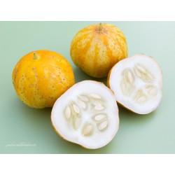Concombre Lemon (jaune)